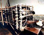 九天剑:中国,活取熊胆与活摘人肝