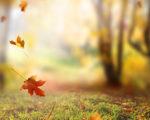 秋天有哪些称法展诗情画意?