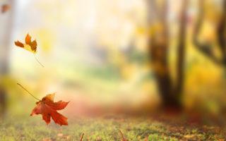 「秋天」有哪些說法?詩情畫意涵養深厚