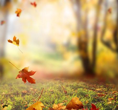 風吹一片葉。(Fotolia)