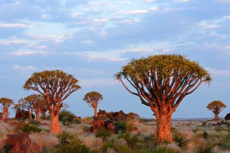 沙漠景觀花崗岩岩石和箭袋樹(二歧蘆薈),納米比亞,南非