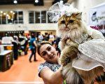 組圖:2016國際貓展 名貓薈萃伊斯坦布爾