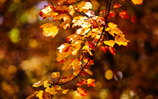 秋分之际 说说Fall和Autumn有何区别