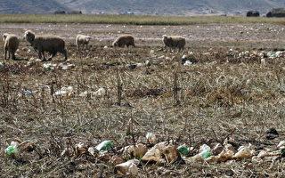 第六次大滅絕?2/3野生動物或在4年内消失