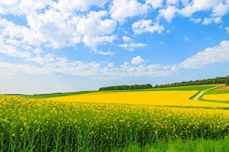 只要做順應自然規律、行善積德、及時止損的事,自然好運就會來。(fotolia)