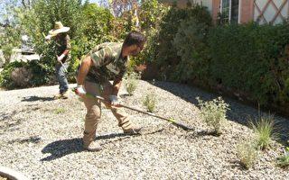 加州3.5亿补贴换草坪划算吗?