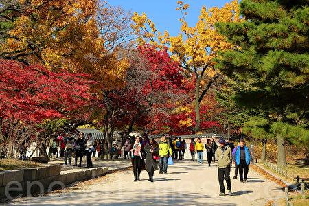 11月初的首尔景福宫美丽的晚秋枫景令人陶醉,心旷神怡。(全景林/大纪元)