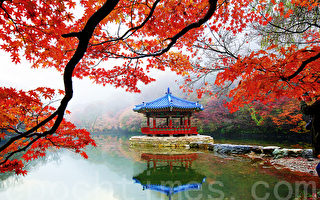 組圖:內藏山最美紅葉  韓國追「楓」首選