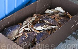 俄海关截获51吨走私中国螃蟹