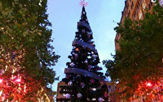 悉尼馬丁廣場點亮聖誕樹
