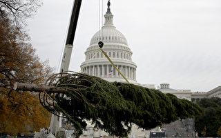 美2016國會聖誕樹運抵華府國會山
