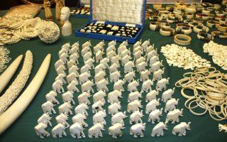 非法買賣犀牛角 華裔古董商認罪求輕判