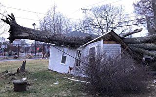 风刮树倒砸垮车库