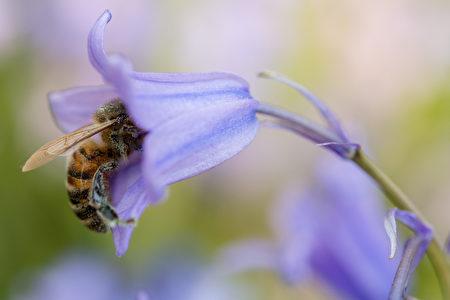 GERMANY-ANIMALS-BEE