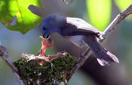 TAIWAN-ANIMAL-BIRDS