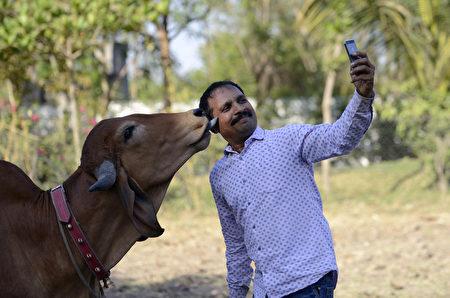 INDIA-RELIGION-ANIMALS-COW