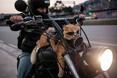 BRAZIL-BIKER-CAT