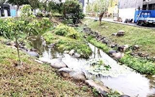 新都生態公園雜草叢生? 市府:自然維護植物數量繁多