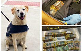 阿德雷德機場警犬發現52萬現金