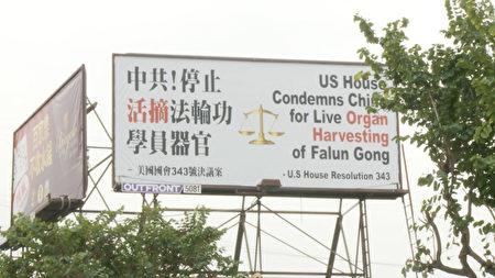 唐人街上耸立的反对活摘广告牌。(杨阳/大纪元)
