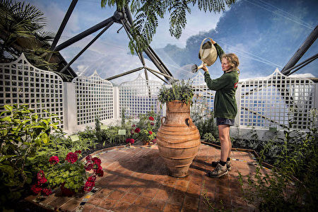 香水花園(圖片由Eden Project提供)。