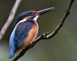 【美圖】鳥類多少種 新研究讓數字翻倍