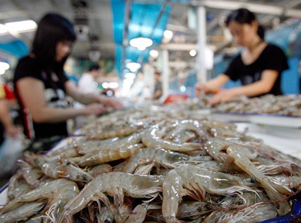 中国是世界上海鲜(包括虾)出口第一大国,但是它有一个巨大的问题,就是抗生素使用过量,其威胁到全球安全。 (TEH ENG KOON/AFP/Getty Images)