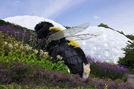 巨大的蜜蜂雕塑(圖片由Eden Project提供)。