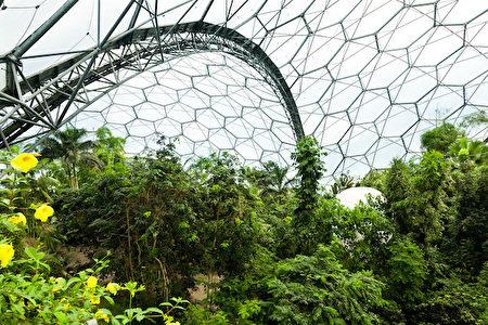 雨林生態園(圖片由Eden Project提供)。