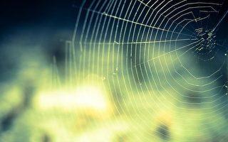 科學家模仿蜘蛛製絲 可望投入再生醫學