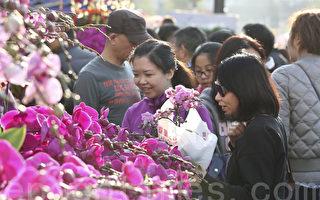 组图:迎新年 香港维园年宵花市现人潮