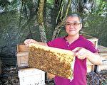 銀蜂蜜是新馬超級食物,其天然酵素為蜂蜜中含量最高,新加坡蜂蜜生產商B-B united的蕭際賢先生將在黃金時代展帶來最優質銀蜂產品,及蜂蜜養生諮詢。(B-B United 提供)