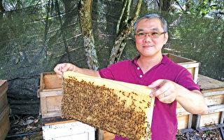 银蜂蜜──大自然孕育的全天然酵素