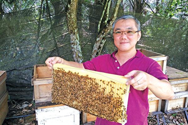 銀蜂蜜──大自然孕育的全天然酵素