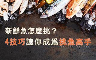 新鮮魚怎麼挑? 4技巧讓你成爲挑魚高手