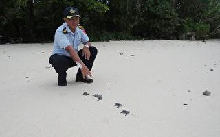 太平岛绿蠵幼龟迷途  迎曙光海巡神救援