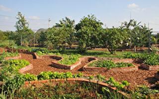 让孩子走进大自然 幼儿园耕环保菜园