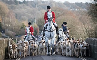 LACOCK, ENGLAND - DECEMBER 26:  Joint Master and Huntsman, Stuart Radbourn (C) leads riders that have arrived for the Avon Vale Hunt's traditional Boxing Day meet in Lacock near Chippenham on December 26, 2016 in Wiltshire, England. Boxing Day is traditionally the biggest day in the hunt calendar, and despite the hunting ban that came into force in 2004, today is expected to see thousands of supporters drawn to meets across the country.  (Photo by Matt Cardy/Getty Images)
