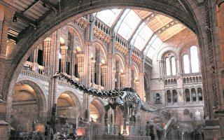 伦敦的自然历史博物馆里面的标志性展品——梁龙Dippy即将搬家。这个长达21.3米的恐龙化石复制品已经在博物馆安家109年了。离开博物馆之后,它将开始全国巡游。它的位置将被另一个庞然大物取代,一具25.3米长、从天花板吊来下的蓝鲸化石。 (Photo by Dan Kitwood/Getty Images)