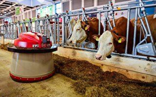 全球最大农业展──德国柏林绿色周开幕