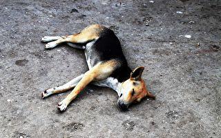 小狗身著瀝青動彈不得 眾人齊力救牠一命