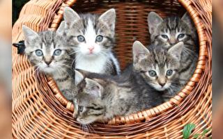 5隻好奇小貓齊甩頭 動作同步堪稱完美