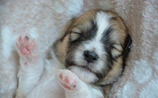 狗狗:誰也叫不醒我 做什麼都是徒勞的