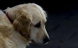 忠犬不捨已故主人 每天赴墓前守護