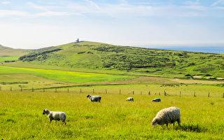 現代牧人的四季日常 還有他的羊(1)
