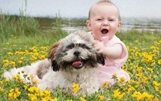 爱的给予者 狗能帮助宝宝的七件事