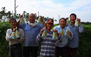 堅持安全農業 美濃敏豆農藥零檢出