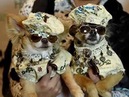 US-FASHION-ANIMAL-PETS