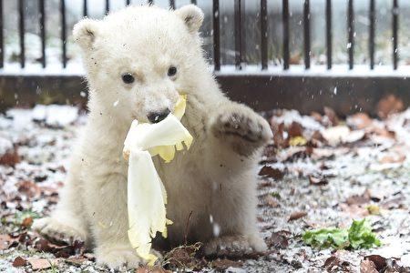 FRANCE-ZOO-BEAR