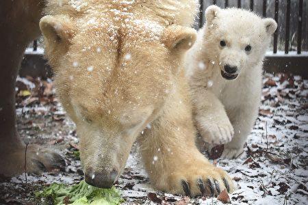 FRANCE-ZOO-POLAR-BEAR